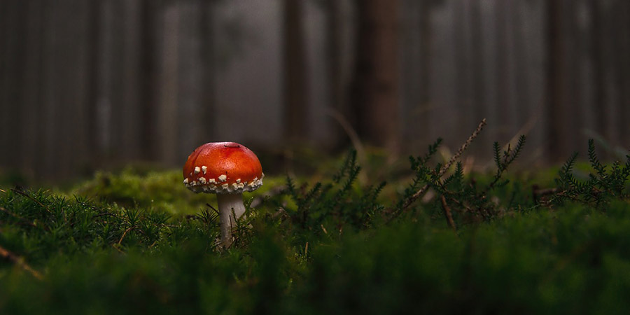 mushroom in a european forest